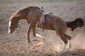 The bucking bronco of sales